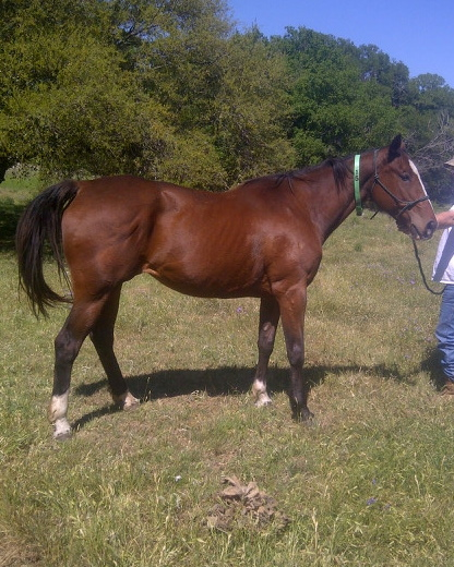 J and K Performance Horses - Prospects For Sale