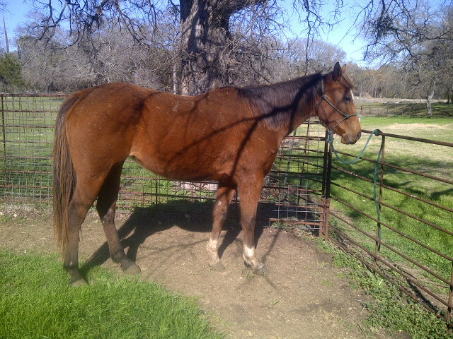 J And K Performance Horses Prospects For Sale